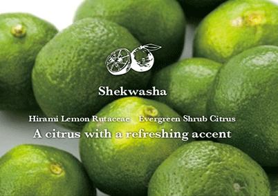 Shekwasha